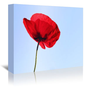 Red Poppy Blue Sky by Mirja Paljakka Wrapped Canvas