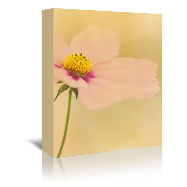 Cosmos Flower Sunset by Mirja Paljakka Wrapped Canvas