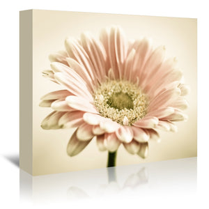 Gerbera Warm by Mirja Paljakka Wrapped Canvas