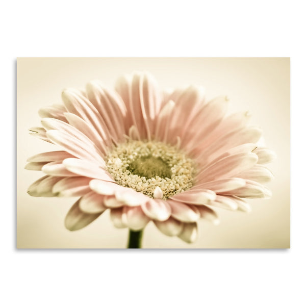 Gerbera Warm by Mirja Paljakka Art Print