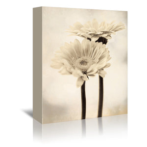 Two Gerberas by Mirja Paljakka Wrapped Canvas