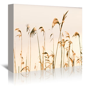 Reeds At Winter by Mirja Paljakka Wrapped Canvas