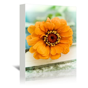 Orange Zinnia On Book by Mirja Paljakka Wrapped Canvas