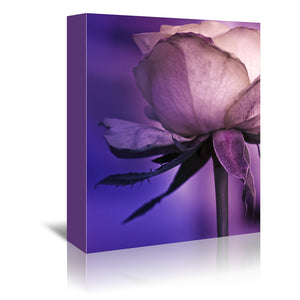 Violet Rose Drama by Mirja Paljakka Wrapped Canvas