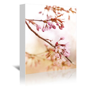 Cherry Blossom 4 by Mirja Paljakka Wrapped Canvas