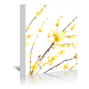Forsythia Branches by Mirja Paljakka Wrapped Canvas