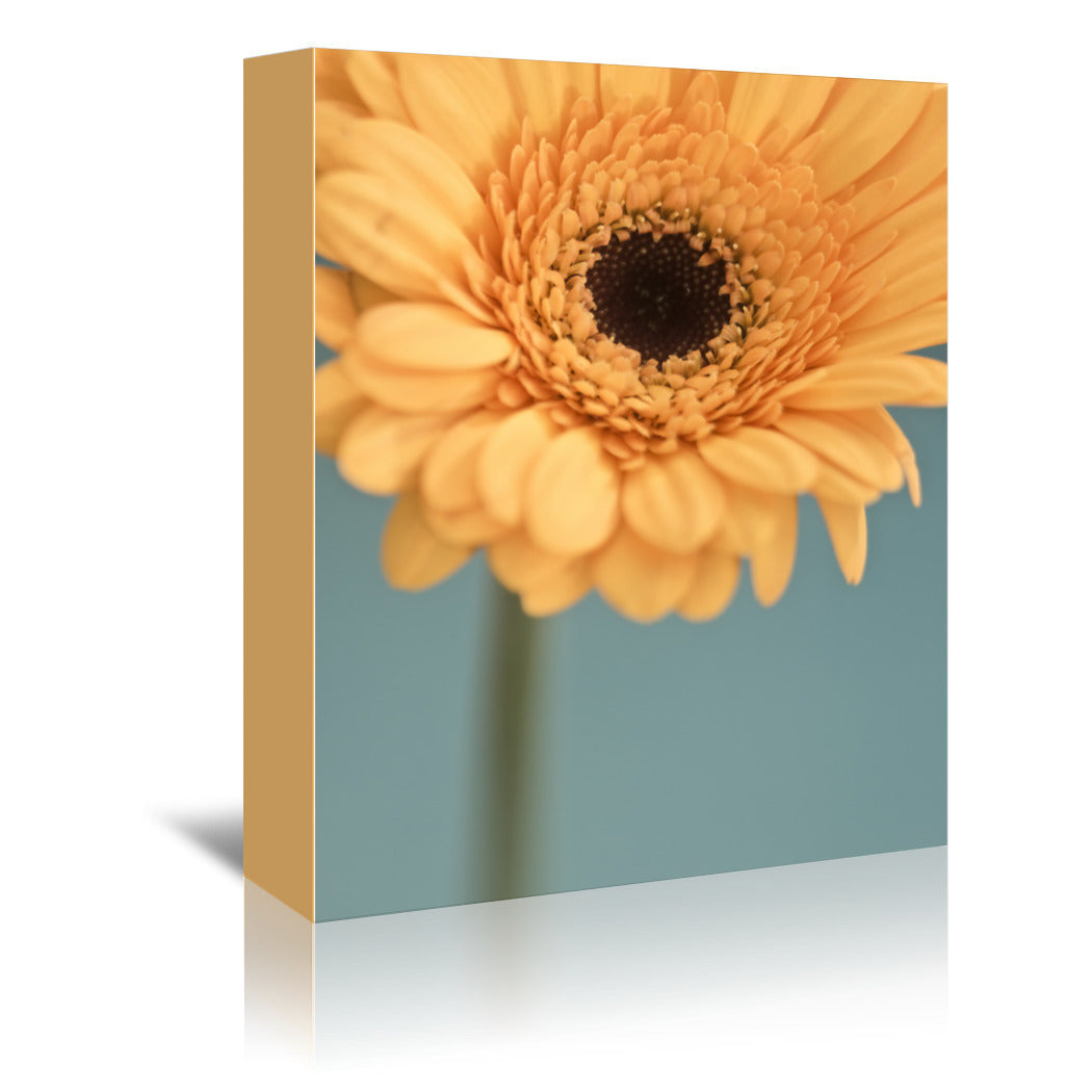 Gerbera 11 by Mirja Paljakka Wrapped Canvas - Wrapped Canvas - Americanflat