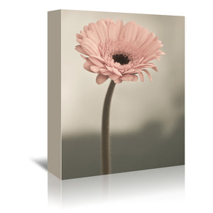 Gerbera 8 by Mirja Paljakka Wrapped Canvas