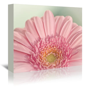 Gerbera 2 by Mirja Paljakka Wrapped Canvas