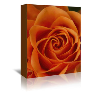 Orange Rose Detail by Mirja Paljakka Wrapped Canvas