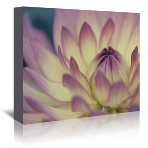 Two Colored Dahlia by Mirja Paljakka Wrapped Canvas