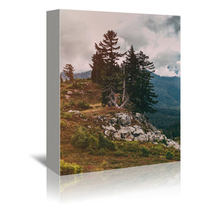 Northwest Forest by Leah Flores Wrapped Canvas
