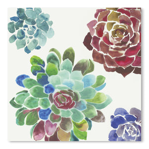 Water Succulents I by PI Creative Art  Print