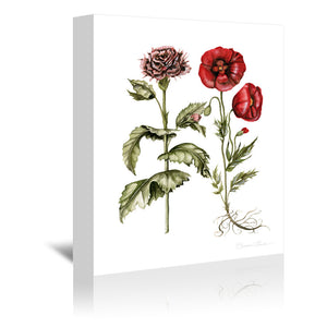 Carnation And Poppies by Shealeen Louise Wrapped Canvas