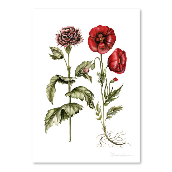 Carnation And Poppies by Shealeen Louise Art Print