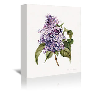 Lilac Branch by Shealeen Louise Wrapped Canvas