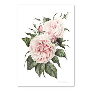 Pink Garden Roses by Shealeen Louise Art Print