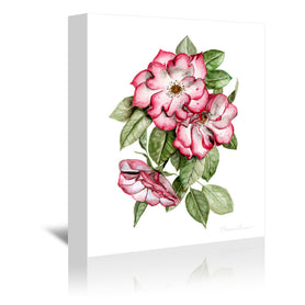 Portland Roses by Shealeen Louise Wrapped Canvas