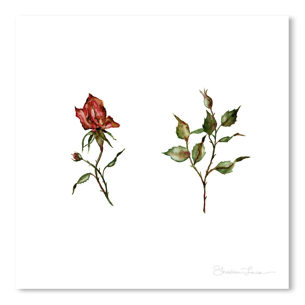 Loose Rose Buds by Shealeen Louise Art Print - Art Print - Americanflat