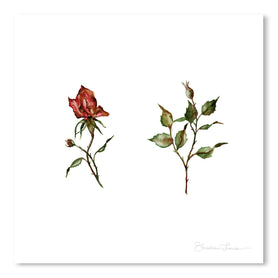Loose Rose Buds by Shealeen Louise Art Print