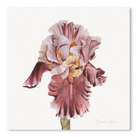 Pink Iris by Shealeen Louise Art Print