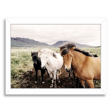 Farm Horses By Nuada - White Framed Print - Wall Art - Americanflat