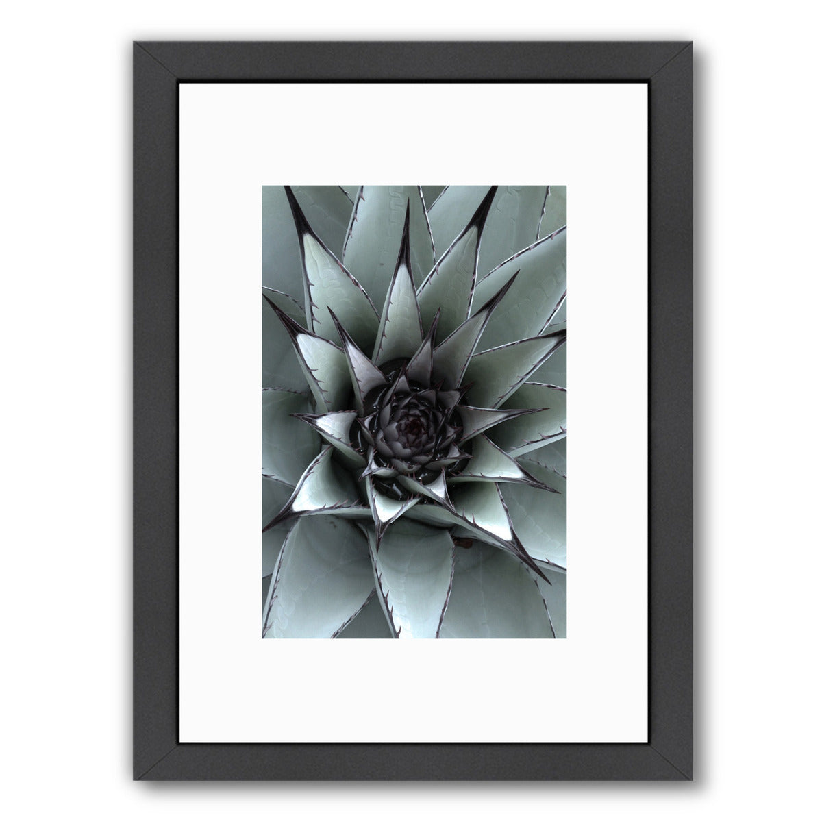 Succulent 1 By Nuada - Black Framed Print - Wall Art - Americanflat