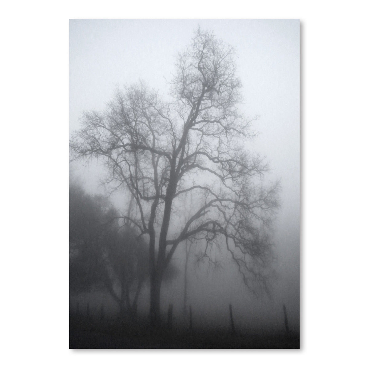 Misty Days by Hope Bainbridge - Art Print - Americanflat