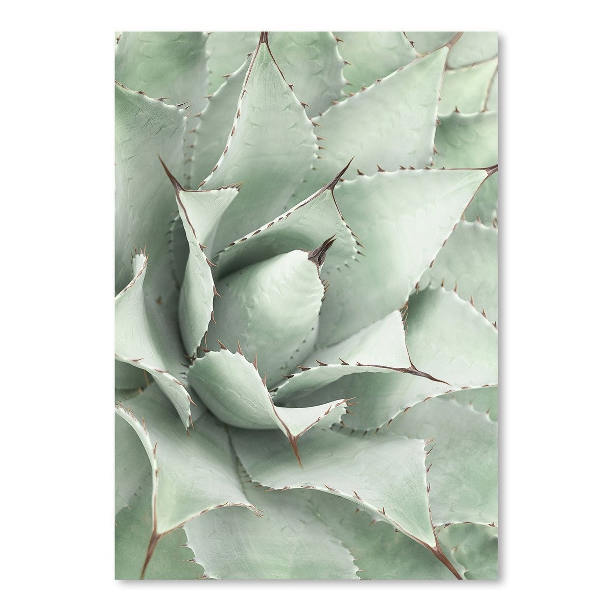 Agave by Sisi and Seb - Art Print - Americanflat