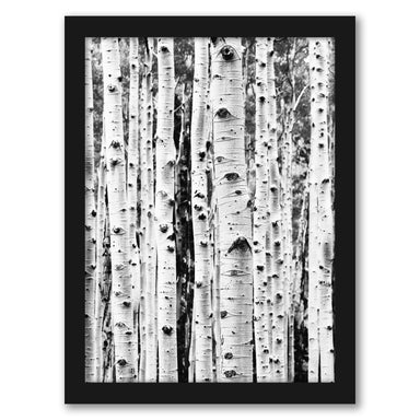 Birch By Sisi And Seb - Black Framed Print - Wall Art - Americanflat