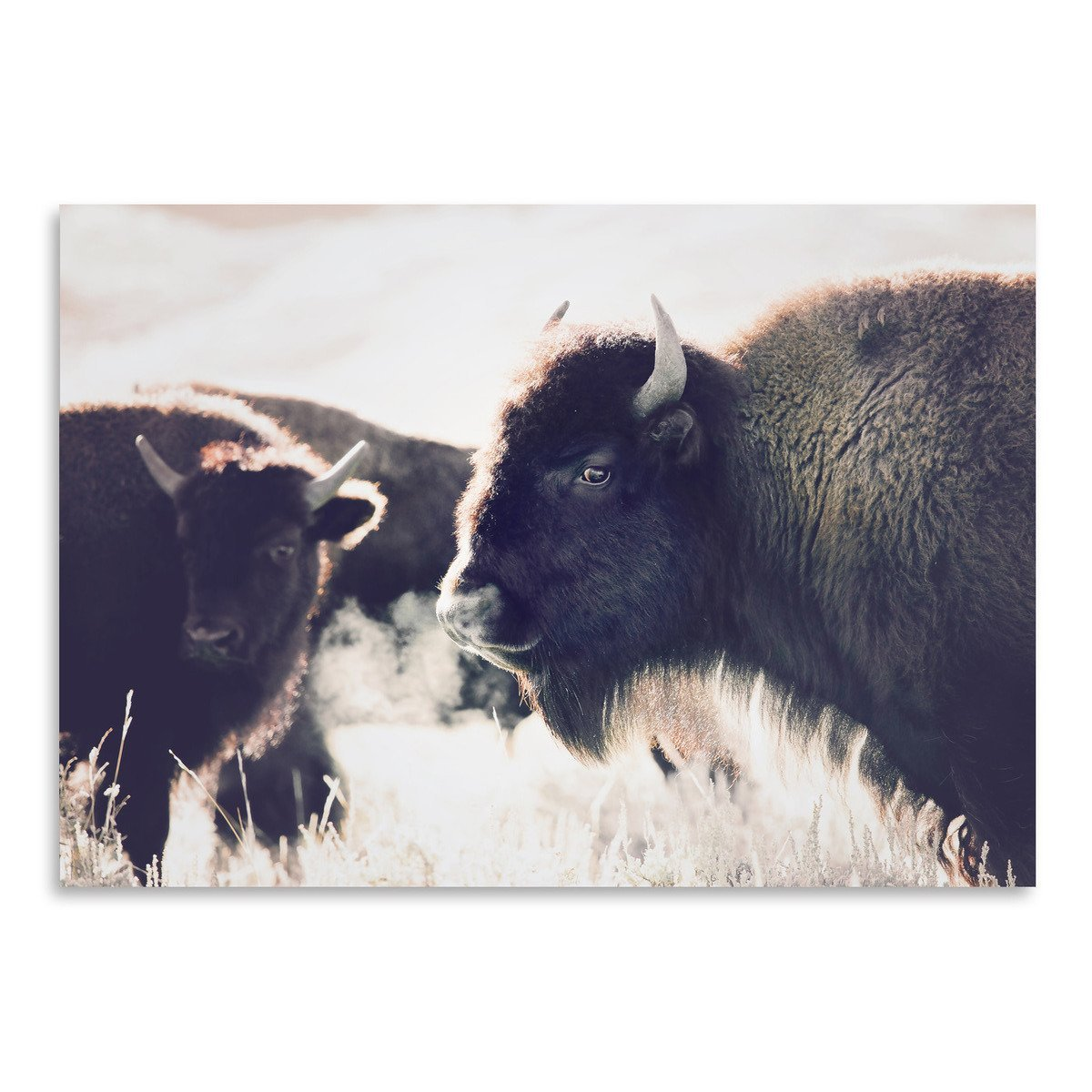 Bison by Sisi and Seb - Art Print - Americanflat