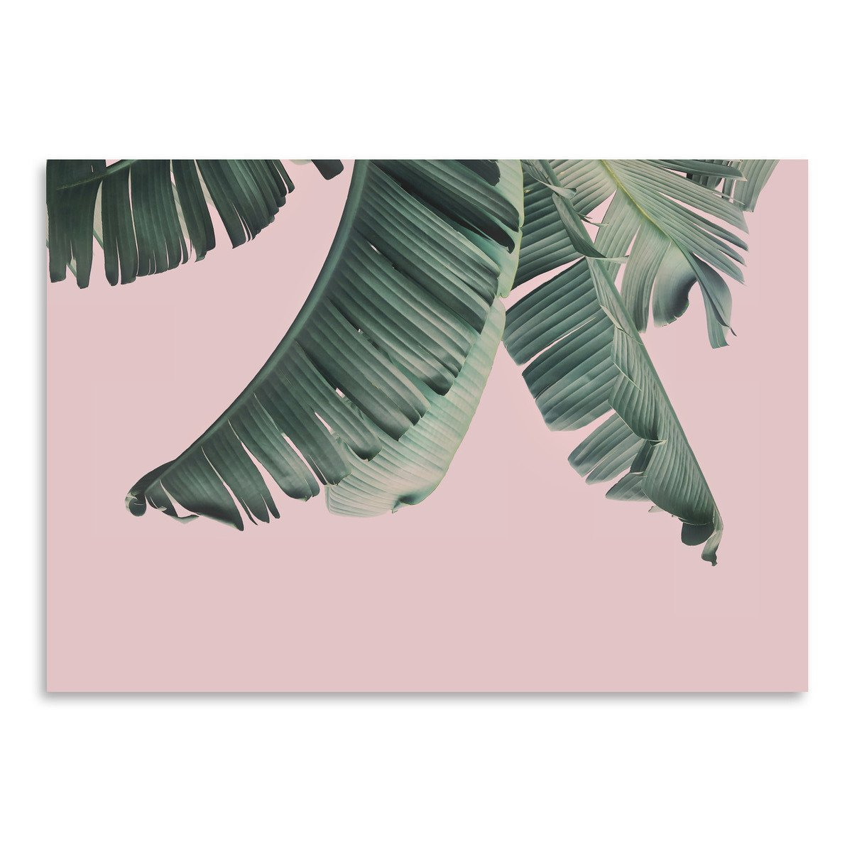 Blush Leaf by Sisi and Seb - Art Print - Americanflat