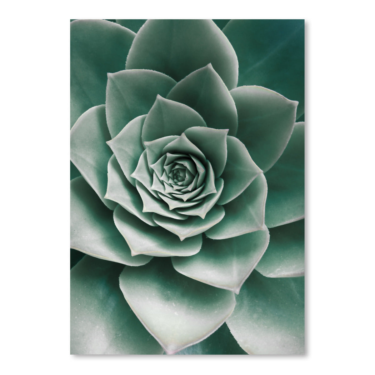 Closeup Succulent by Sisi and Seb - Art Print - Americanflat