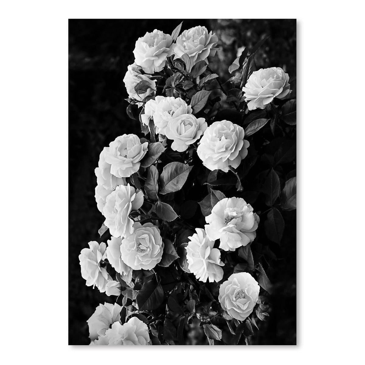 Roses by Sisi and Seb - Art Print - Americanflat