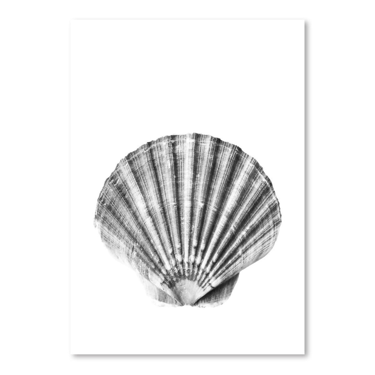 Sea Shell by Sisi and Seb - Art Print - Americanflat