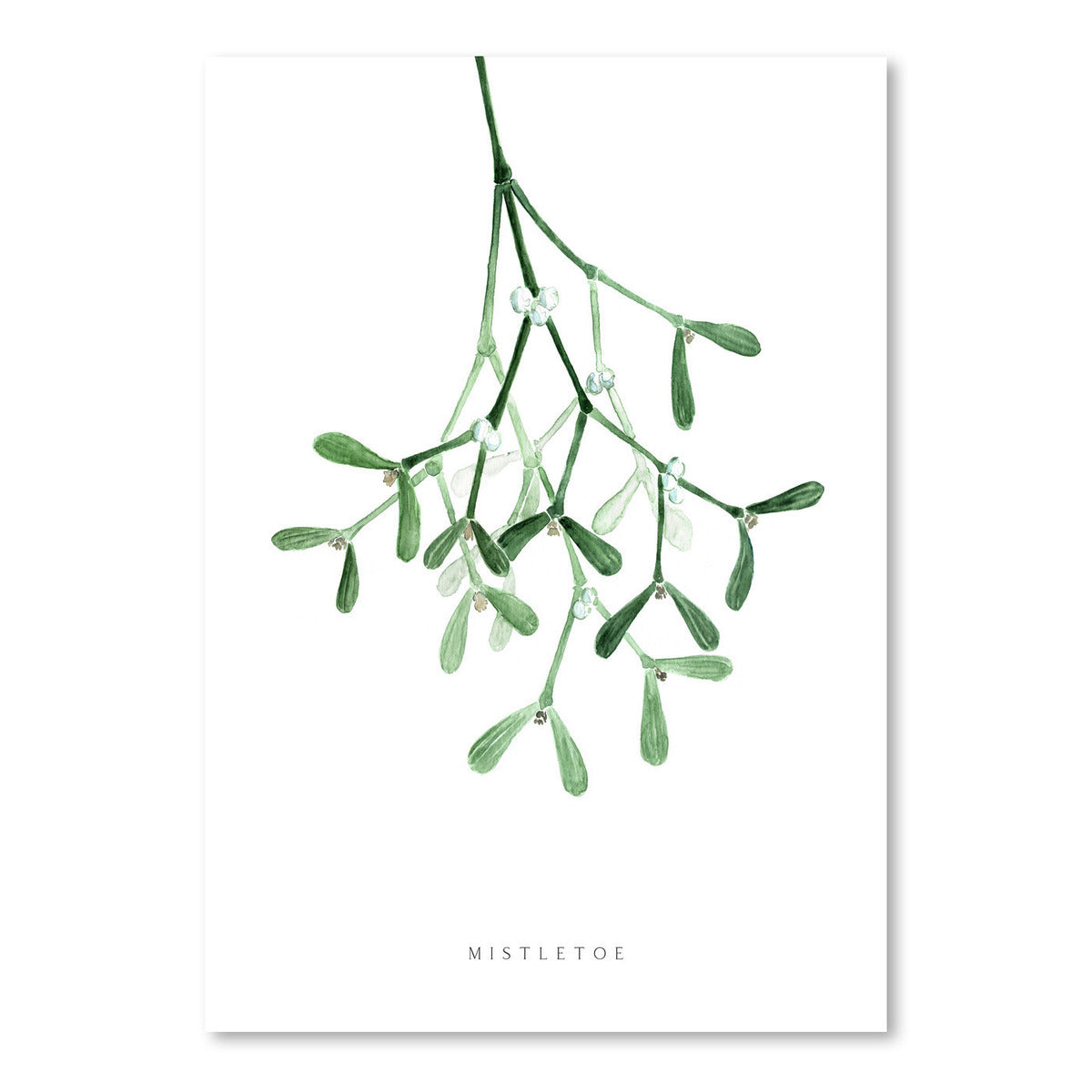 Watercolor Mistletoe by Blursbyai - Art Print - Americanflat
