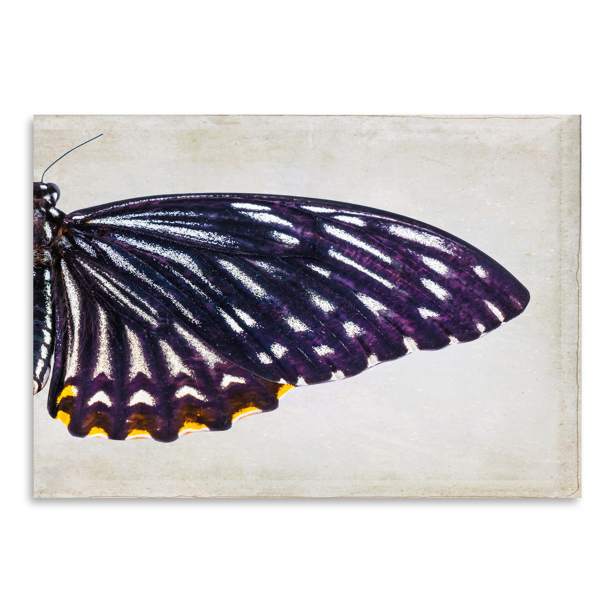 Purple Butterfly II by Chaos & Wonder Design - Art Print - Americanflat
