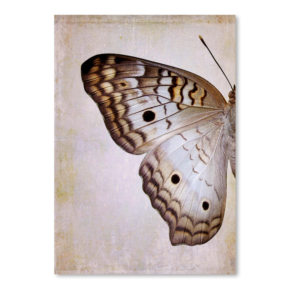 Gray Pansy Butterfly I by Chaos & Wonder Design - Art Print - Americanflat
