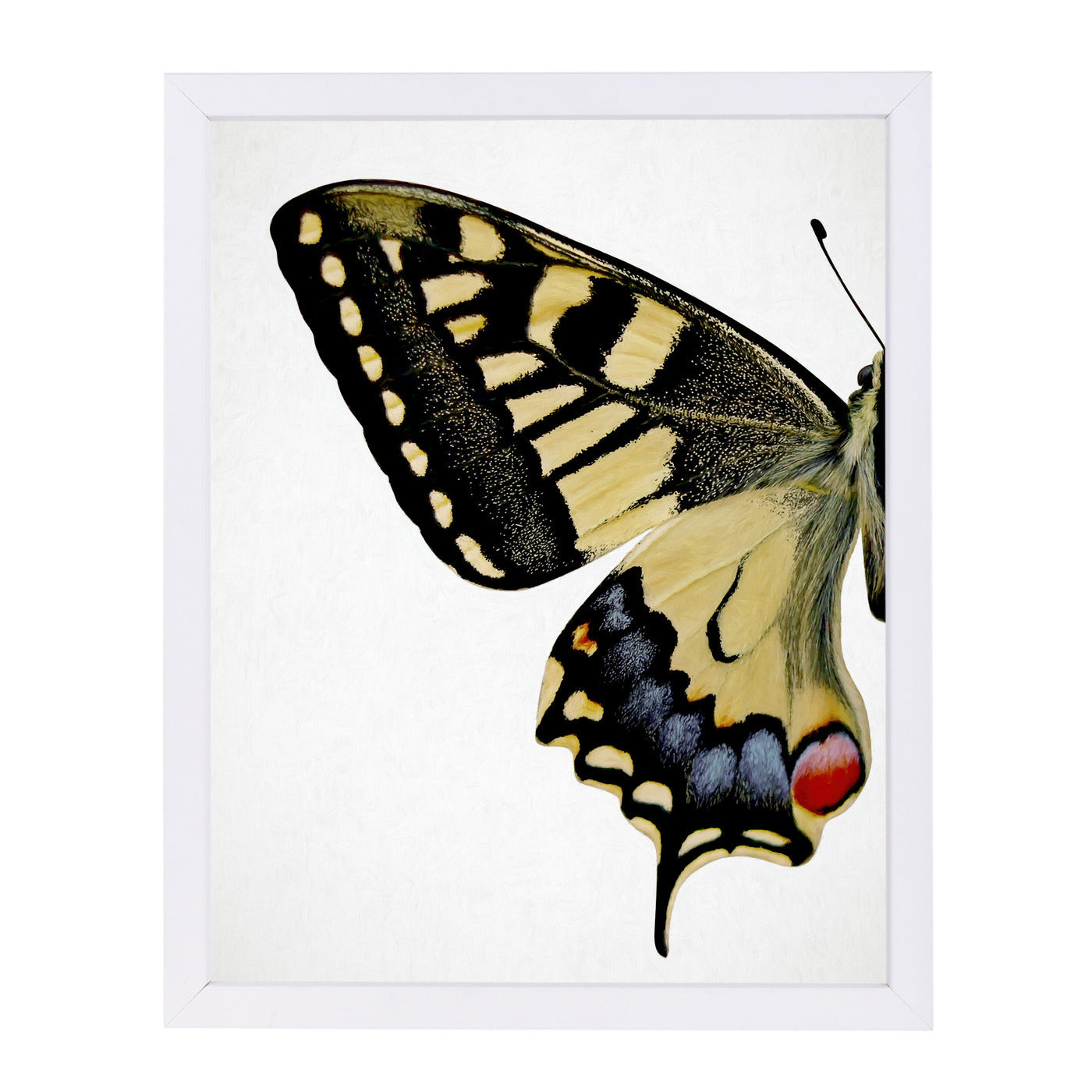 Swallowtail I By Chaos & Wonder Design - White Framed Print - Wall Art - Americanflat