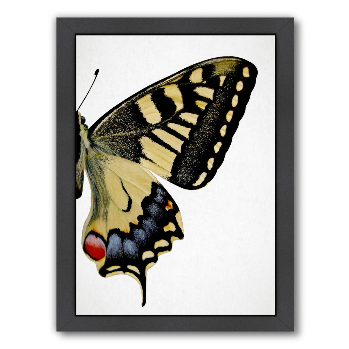 Swallowtail Ii By Chaos & Wonder Design - Black Framed Print - Wall Art - Americanflat