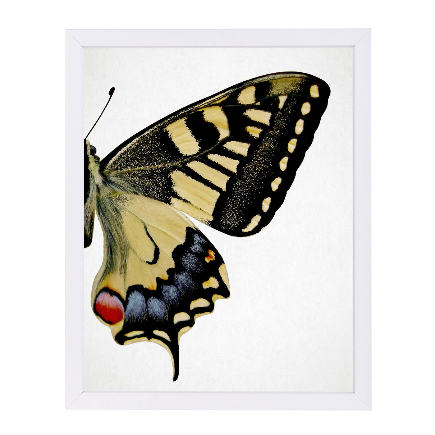 Swallowtail Ii By Chaos & Wonder Design - White Framed Print - Wall Art - Americanflat