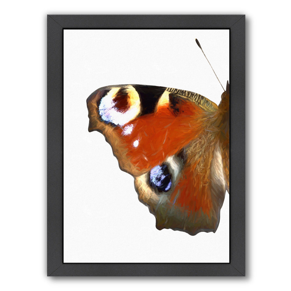 "Peacock Butterfly Wing I By Chaos & Wonder Design - Black Framed Print, Wall Art, Chaos & Wonder Design, 8"" x 10"""