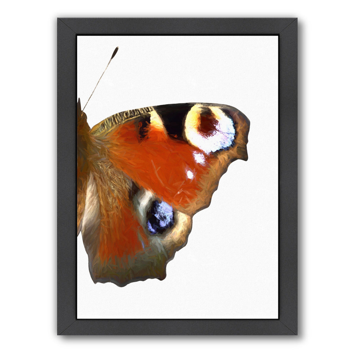 Peaock Butterfly Wing Ii By Chaos & Wonder Design - Black Framed Print - Wall Art - Americanflat