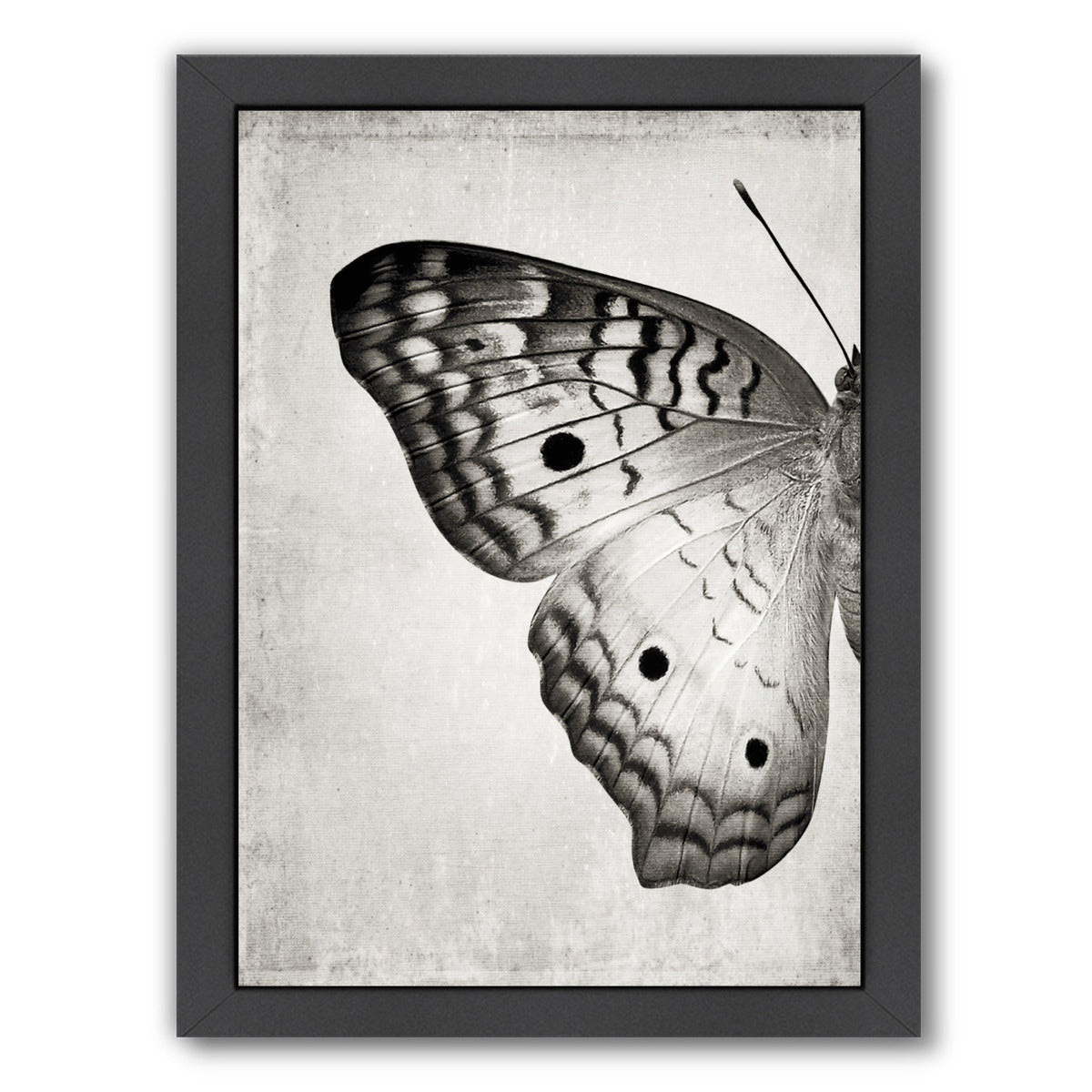 Gray Butterfly I By Chaos & Wonder Design - Black Framed Print - Wall Art - Americanflat