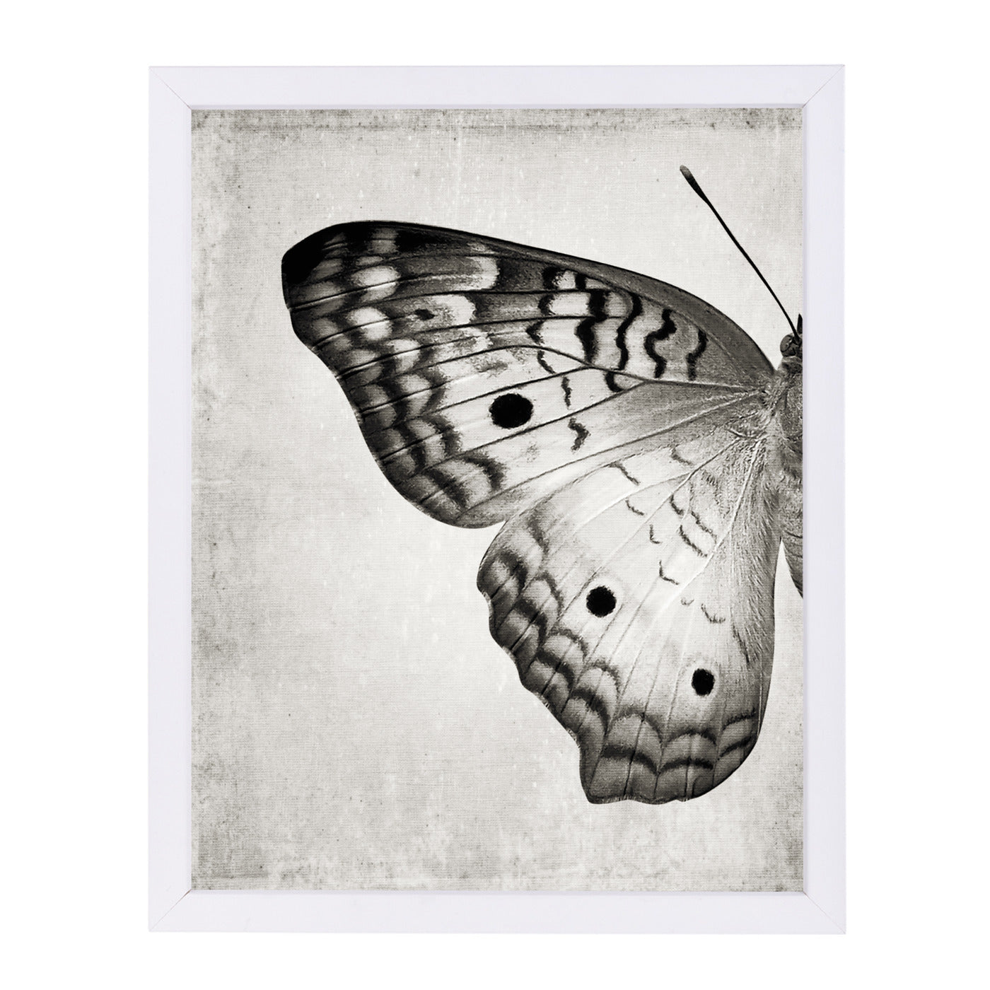 "Gray Butterfly I By Chaos & Wonder Design - White Framed Print, Wall Art, Chaos & Wonder Design, 8"" x 10"""