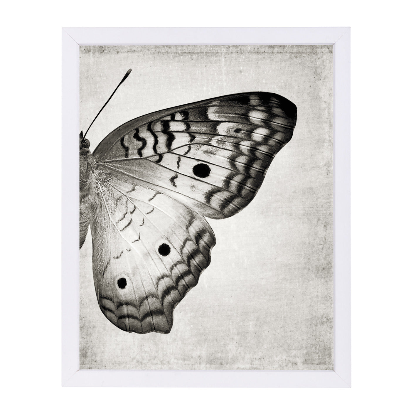 Gray Butterfly Ii By Chaos & Wonder Design - White Framed Print - Wall Art - Americanflat