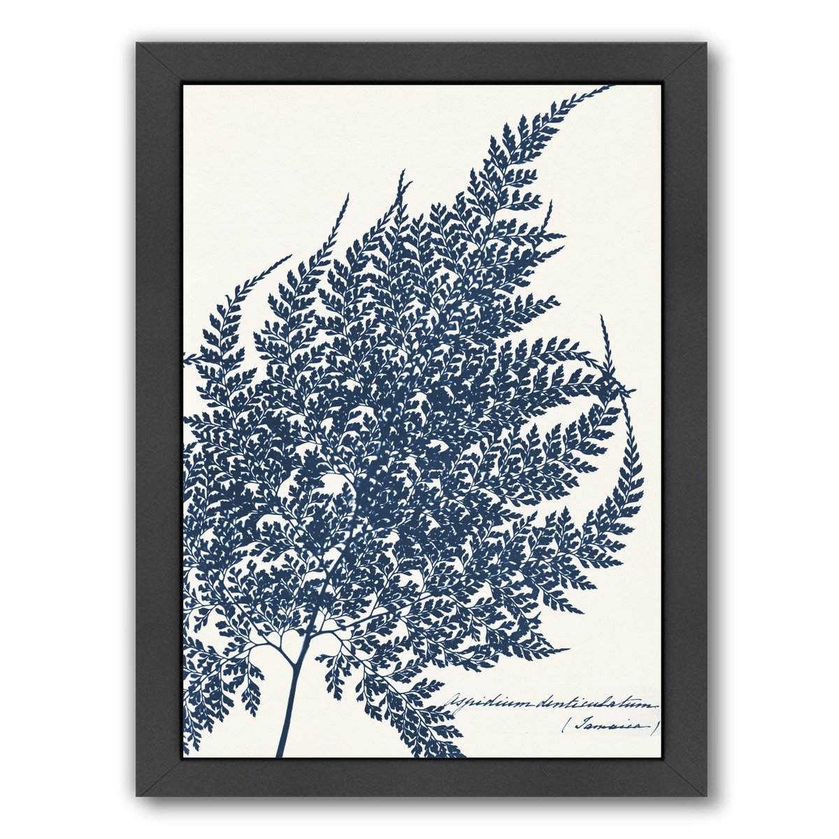 Blue Fern I By Chaos & Wonder Design - Black Framed Print - Wall Art - Americanflat