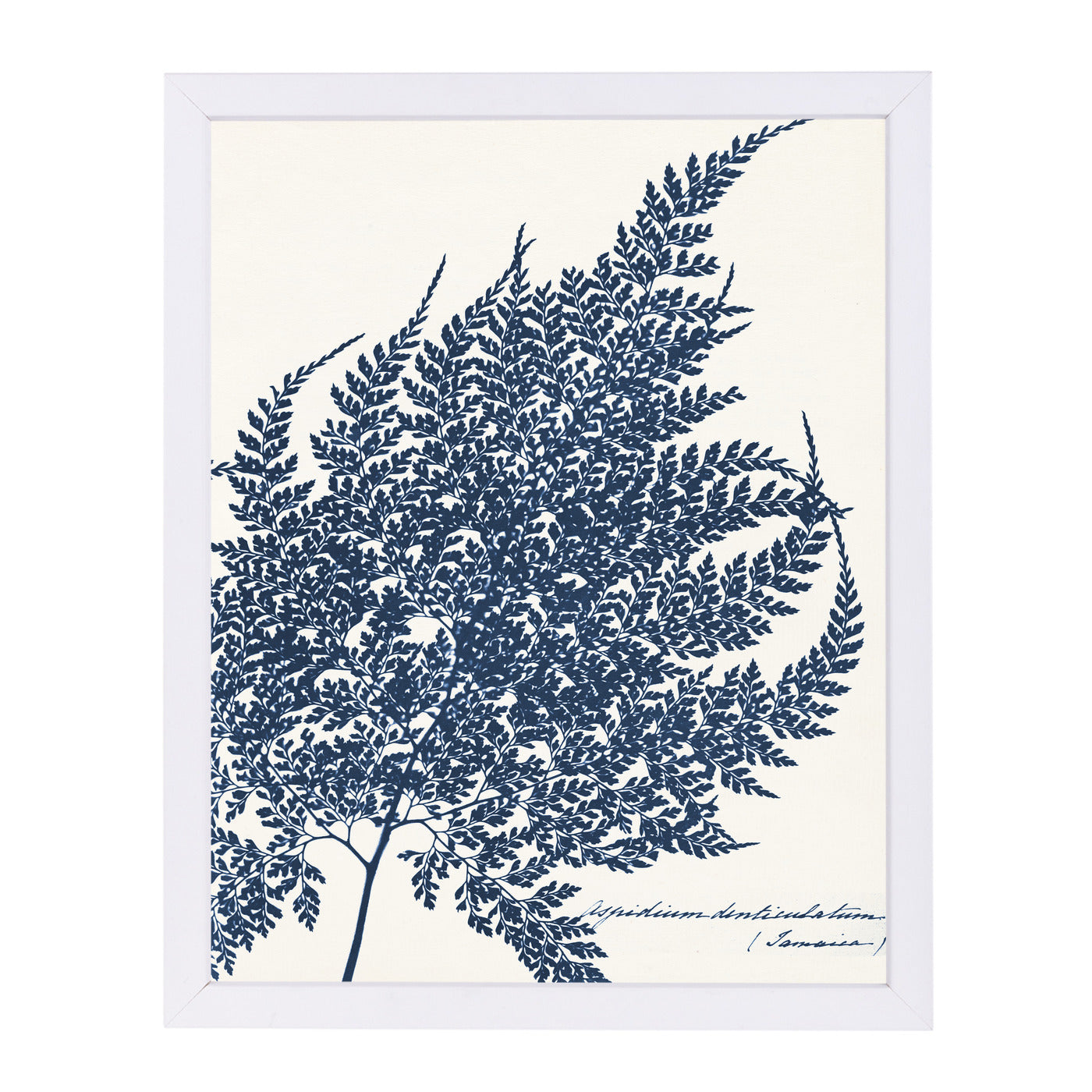 "Blue Fern I By Chaos & Wonder Design - White Framed Print, Wall Art, Chaos & Wonder Design, 8"" x 10"""