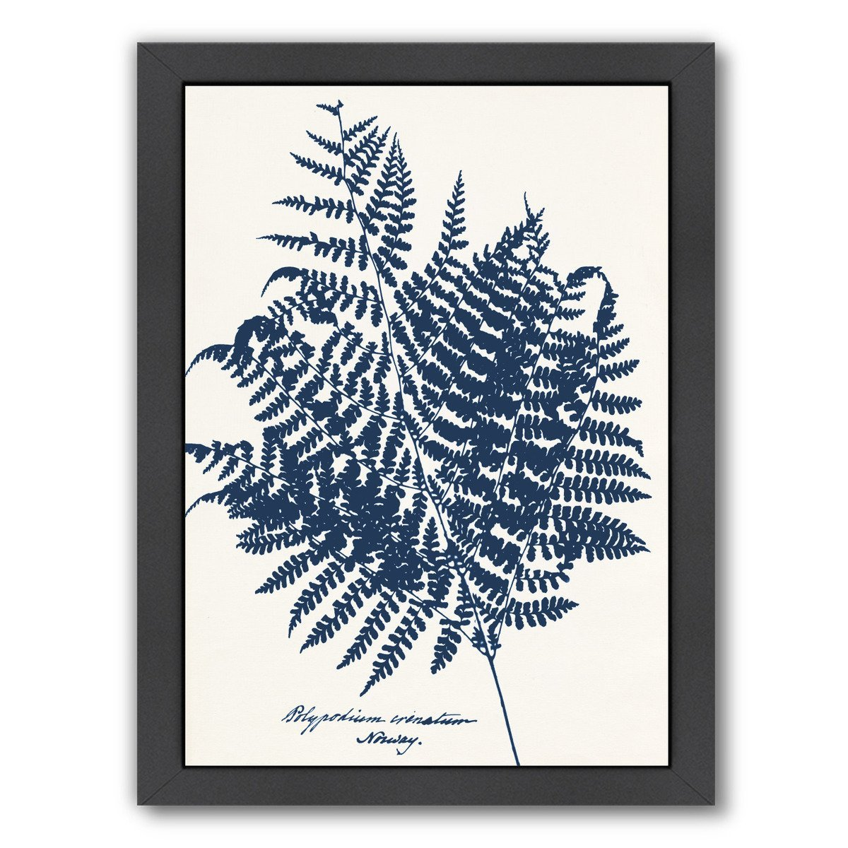 Blue Fern Norway By Chaos & Wonder Design - Black Framed Print - Wall Art - Americanflat