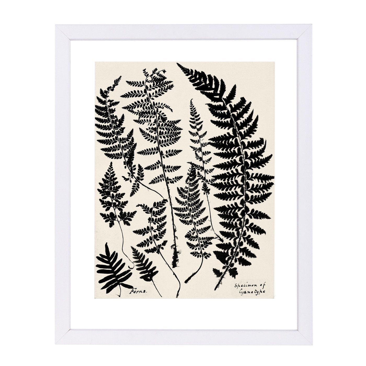 Black Ferns By Chaos & Wonder Design - White Framed Print - Wall Art - Americanflat